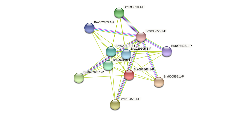 Bra007868 protein (Brassica rapa) - STRING interaction network