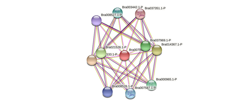Bra007903 protein (Brassica rapa) - STRING interaction network