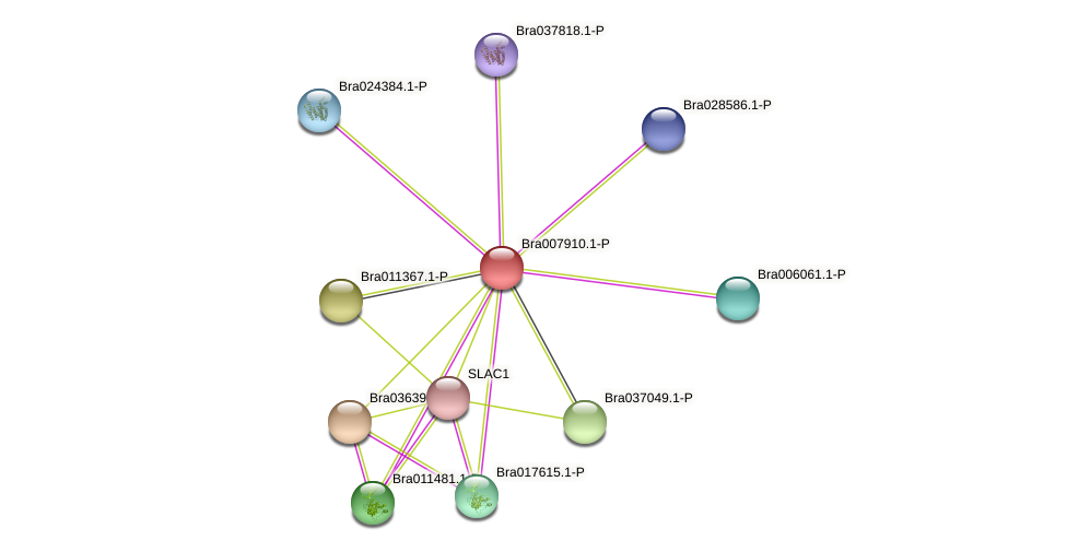 Bra007910 protein (Brassica rapa) - STRING interaction network