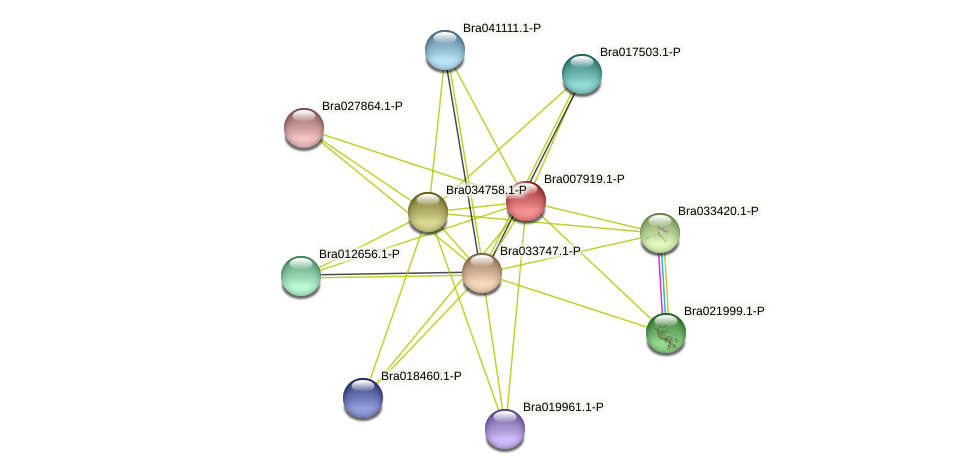 Bra007919 protein (Brassica rapa) - STRING interaction network
