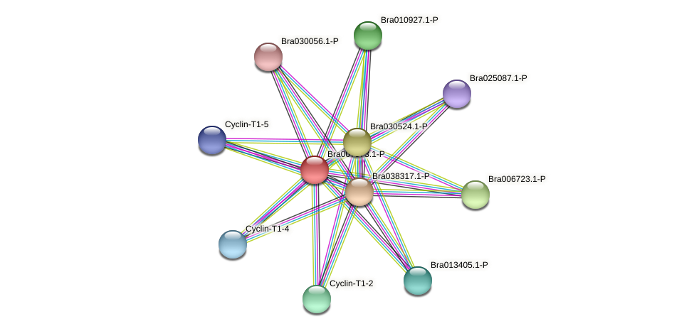 Bra007973 protein (Brassica rapa) - STRING interaction network