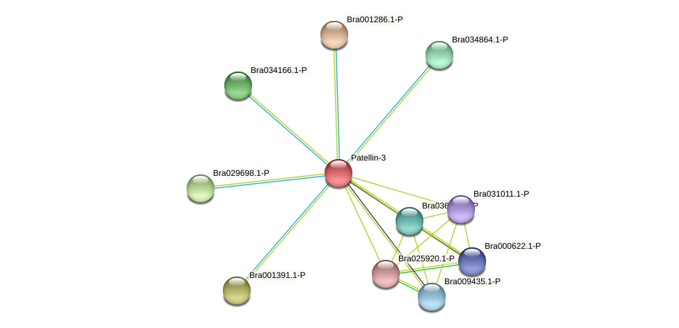 Bra008013 protein (Brassica rapa) - STRING interaction network