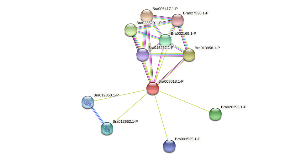Bra008018 protein (Brassica rapa) - STRING interaction network
