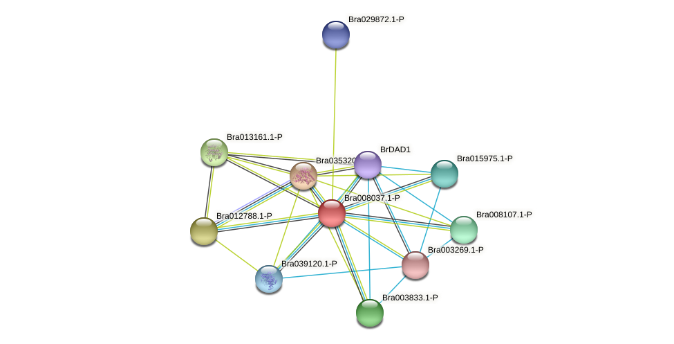 Bra008037 protein (Brassica rapa) - STRING interaction network