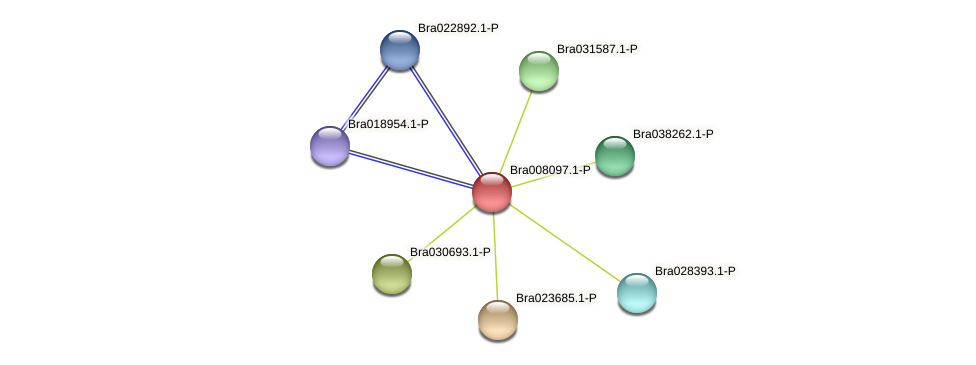 Bra008097 protein (Brassica rapa) - STRING interaction network