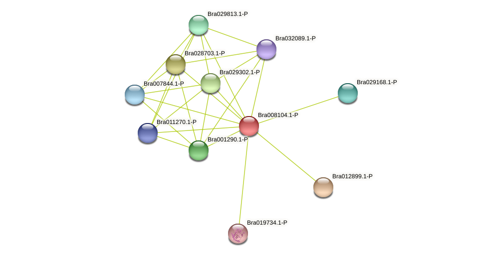 Bra008104 protein (Brassica rapa) - STRING interaction network
