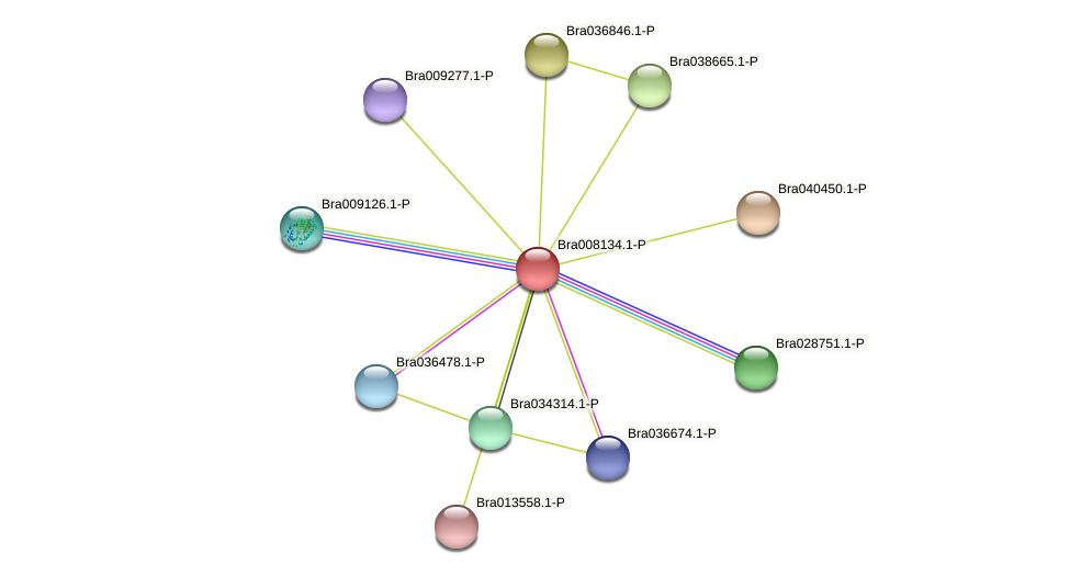 Bra008134 protein (Brassica rapa) - STRING interaction network