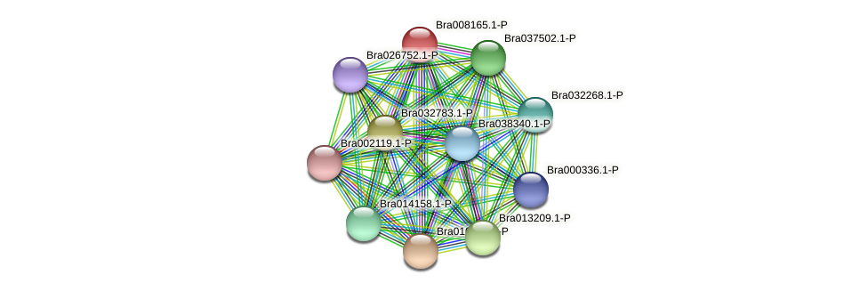 Bra008165 protein (Brassica rapa) - STRING interaction network