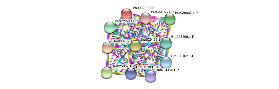 Bra008202 protein (Brassica rapa) - STRING interaction network