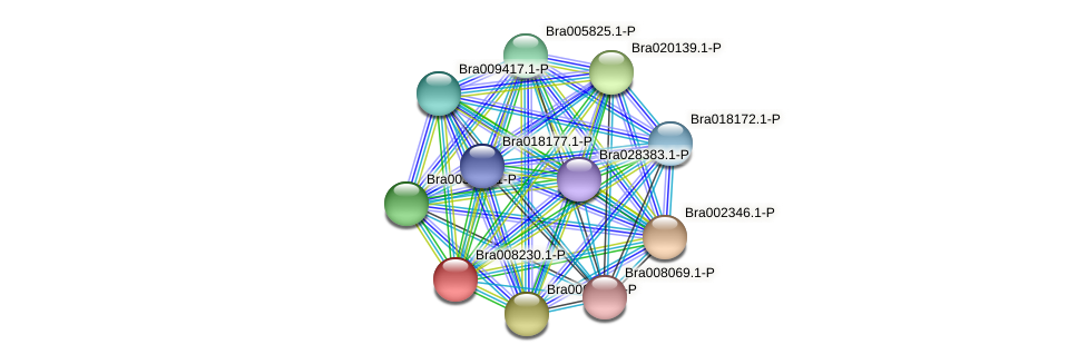 Bra008230 protein (Brassica rapa) - STRING interaction network