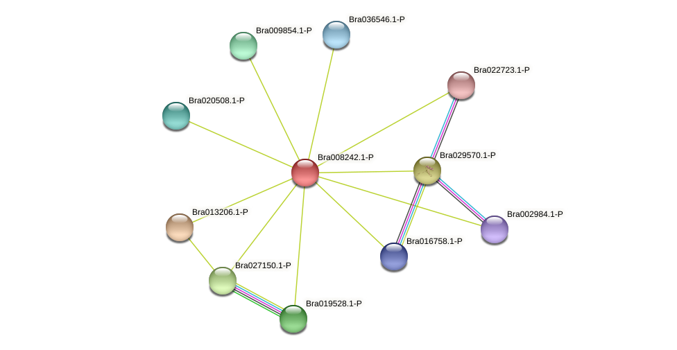 Bra008242 protein (Brassica rapa) - STRING interaction network