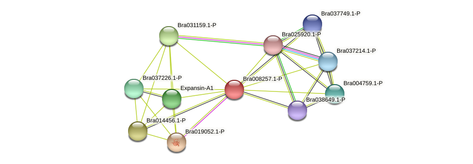 Bra008257 protein (Brassica rapa) - STRING interaction network