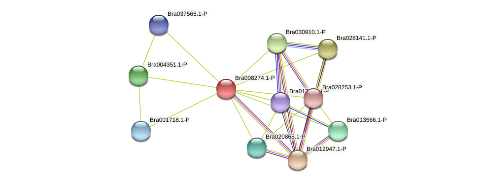 Bra008274 protein (Brassica rapa) - STRING interaction network