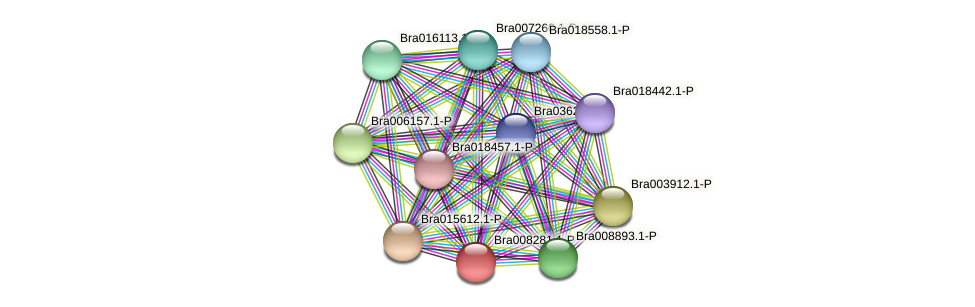 Bra008281 protein (Brassica rapa) - STRING interaction network