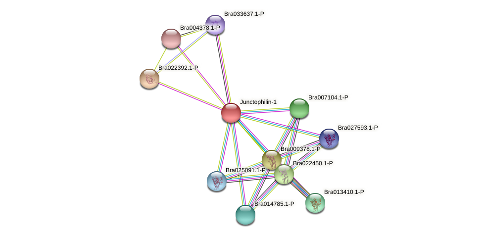 Bra008321 protein (Brassica rapa) - STRING interaction network