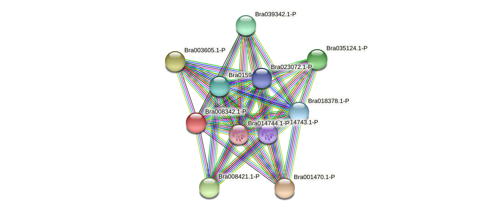 Bra008342 protein (Brassica rapa) - STRING interaction network