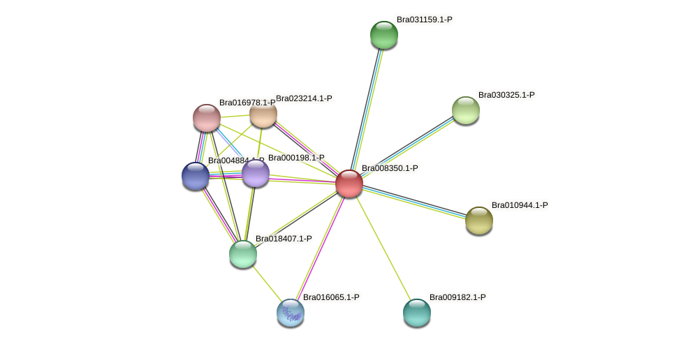 Bra008350 protein (Brassica rapa) - STRING interaction network