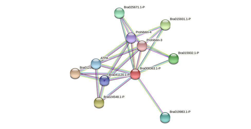 Bra008363 protein (Brassica rapa) - STRING interaction network