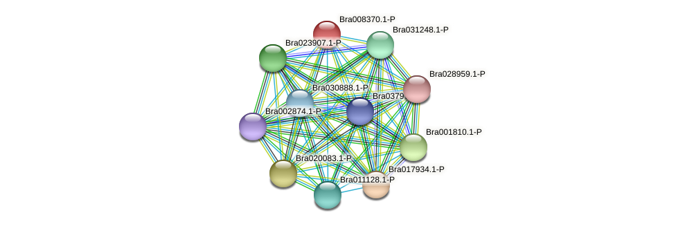 Bra008370 protein (Brassica rapa) - STRING interaction network
