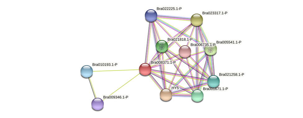 Bra008371 protein (Brassica rapa) - STRING interaction network