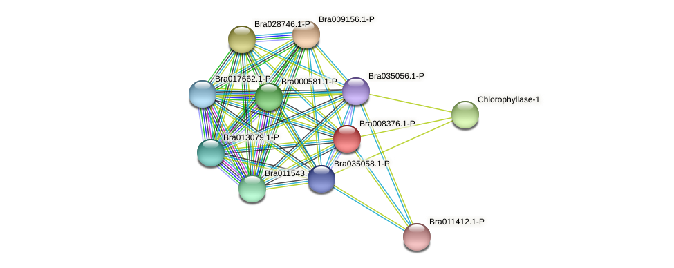 Bra008376 protein (Brassica rapa) - STRING interaction network