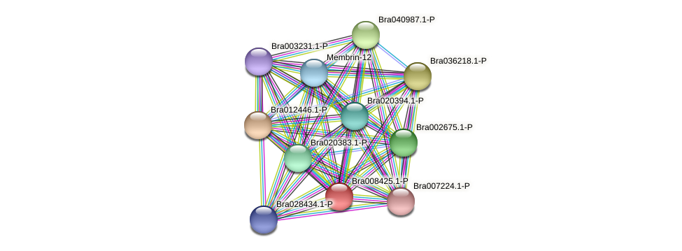 Bra008425 protein (Brassica rapa) - STRING interaction network