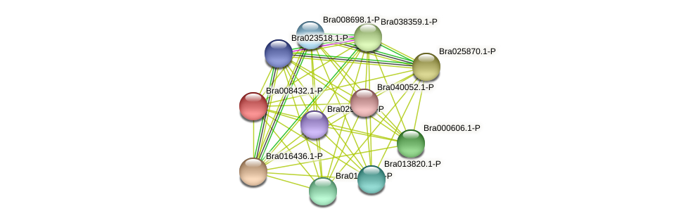 Bra008432 protein (Brassica rapa) - STRING interaction network