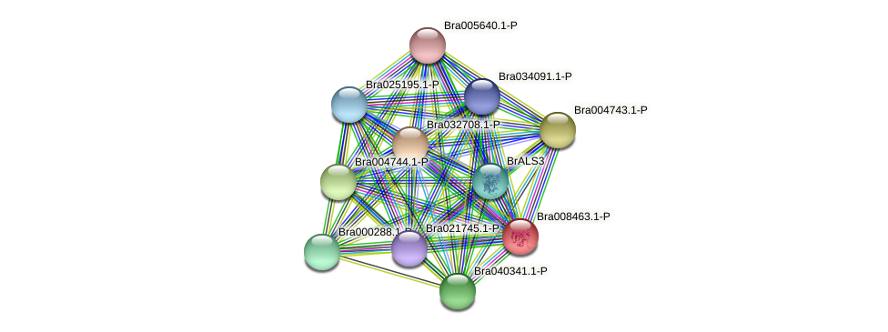 Bra008463 protein (Brassica rapa) - STRING interaction network