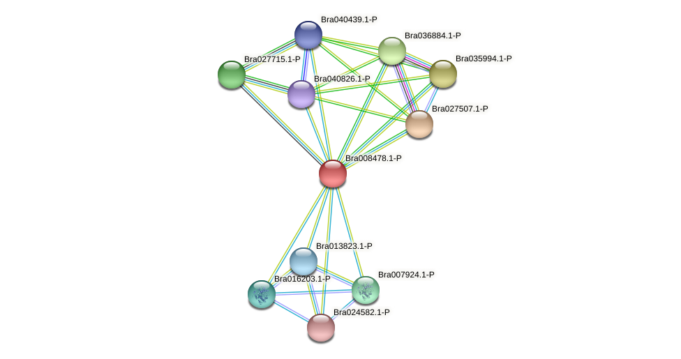 Bra008478 protein (Brassica rapa) - STRING interaction network