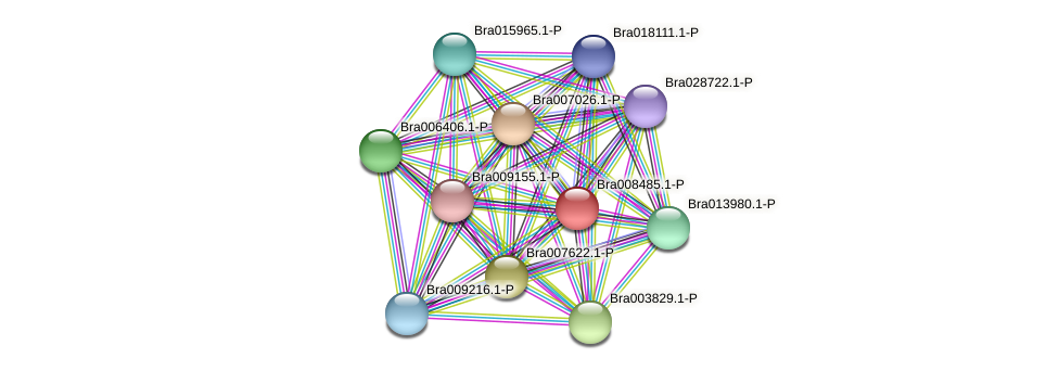 Bra008485 protein (Brassica rapa) - STRING interaction network