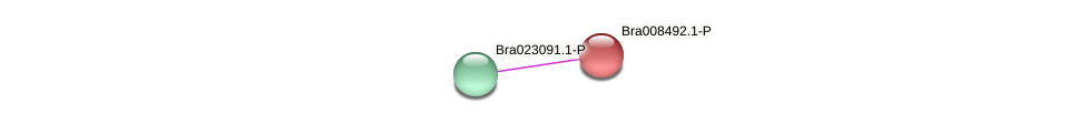 Bra008492 protein (Brassica rapa) - STRING interaction network