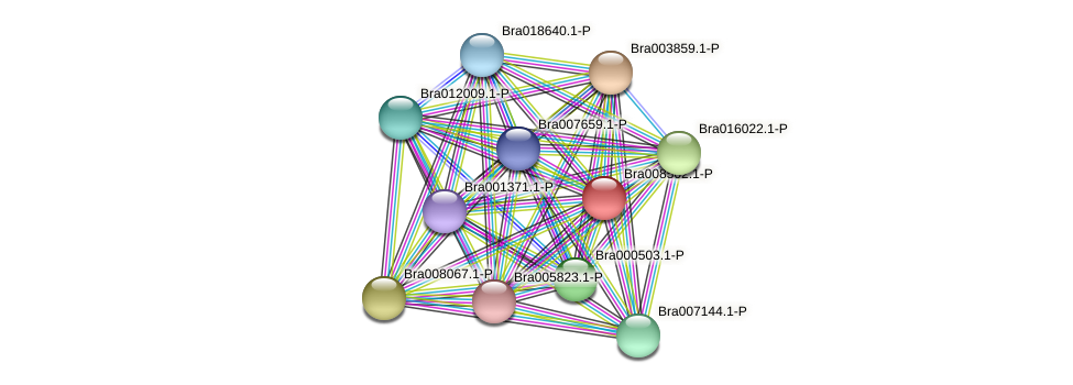 Bra008502 protein (Brassica rapa) - STRING interaction network