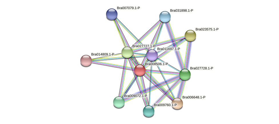 Bra008506 protein (Brassica rapa) - STRING interaction network