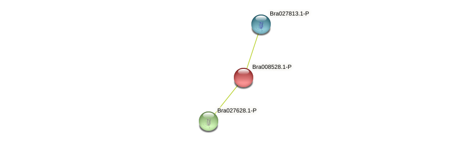 Bra008528 protein (Brassica rapa) - STRING interaction network