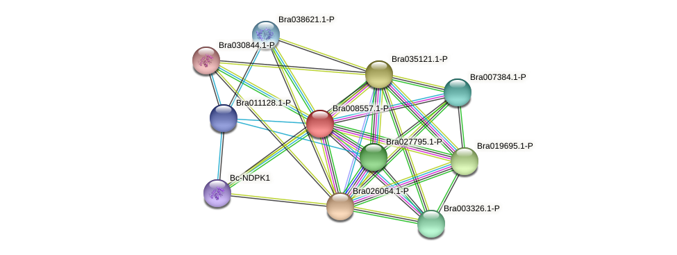 Bra008557 protein (Brassica rapa) - STRING interaction network