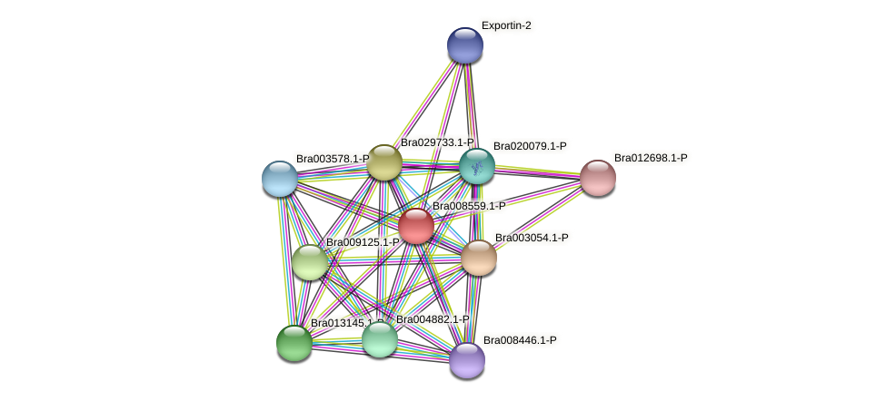 Bra008559 protein (Brassica rapa) - STRING interaction network