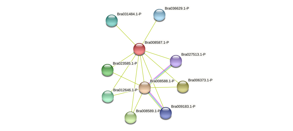 Bra008587 protein (Brassica rapa) - STRING interaction network