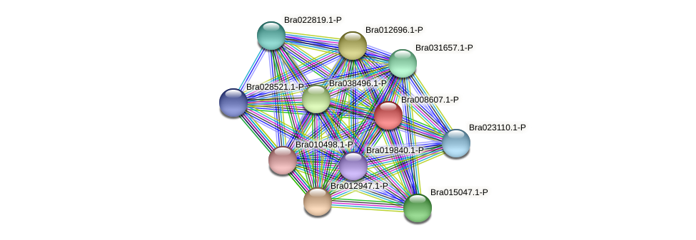 Bra008607 protein (Brassica rapa) - STRING interaction network