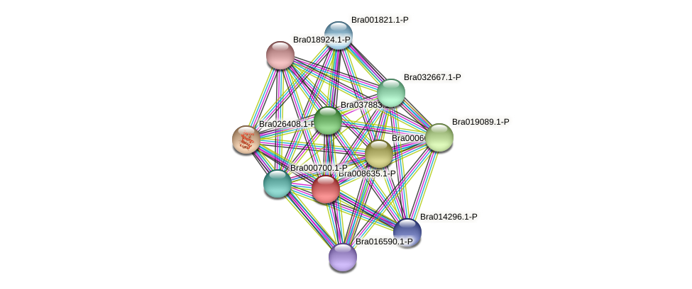 Bra008635 protein (Brassica rapa) - STRING interaction network