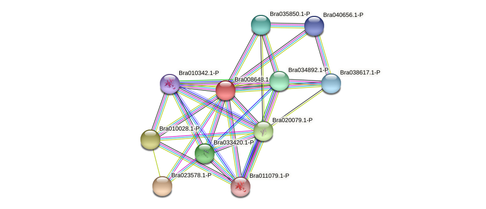 Bra008648 protein (Brassica rapa) - STRING interaction network