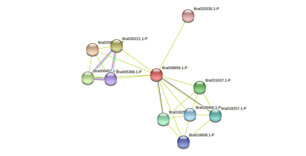 Bra008656 protein (Brassica rapa) - STRING interaction network