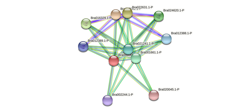 Bra008662 protein (Brassica rapa) - STRING interaction network