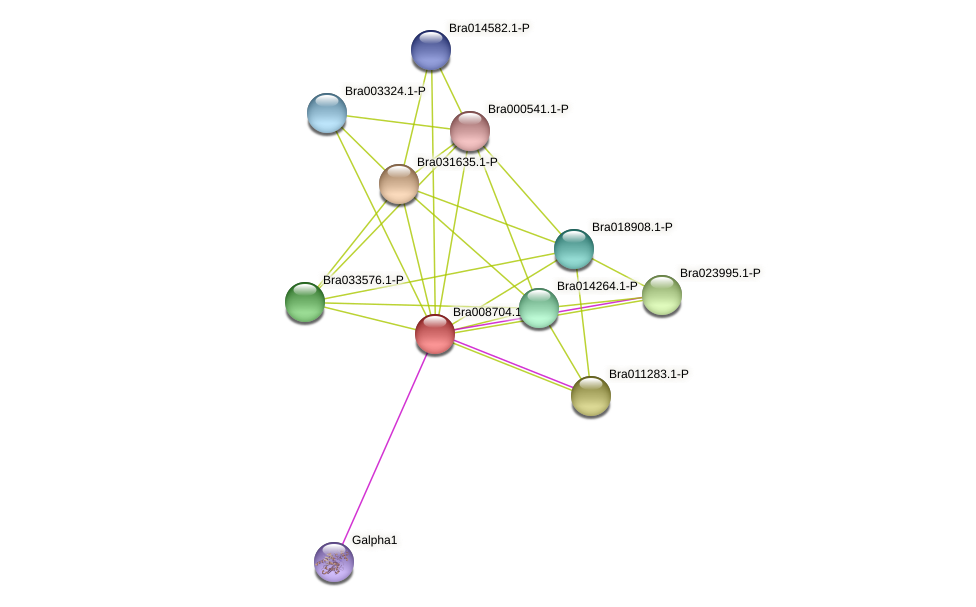 Bra008704 protein (Brassica rapa) - STRING interaction network