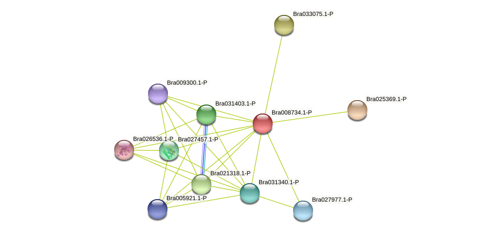 Bra008734 protein (Brassica rapa) - STRING interaction network