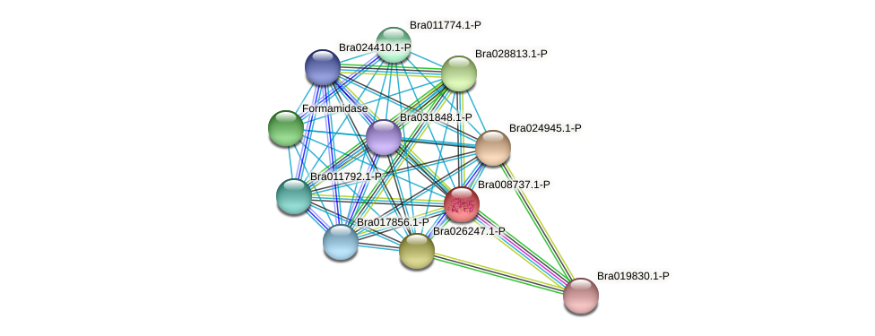 Bra008737 protein (Brassica rapa) - STRING interaction network