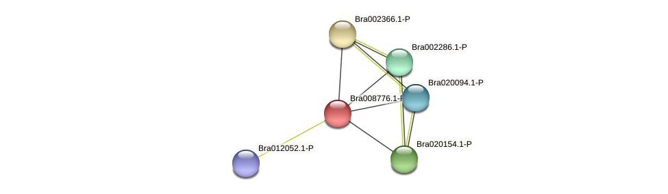 Bra008776 protein (Brassica rapa) - STRING interaction network