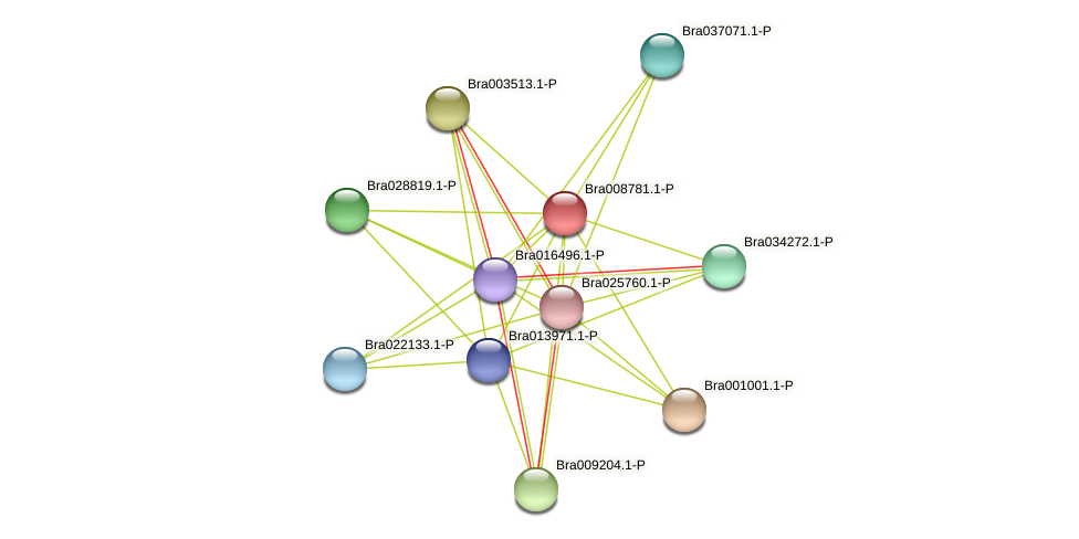Bra008781 protein (Brassica rapa) - STRING interaction network