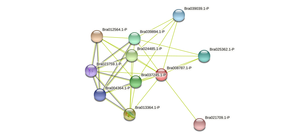 Bra008787 protein (Brassica rapa) - STRING interaction network
