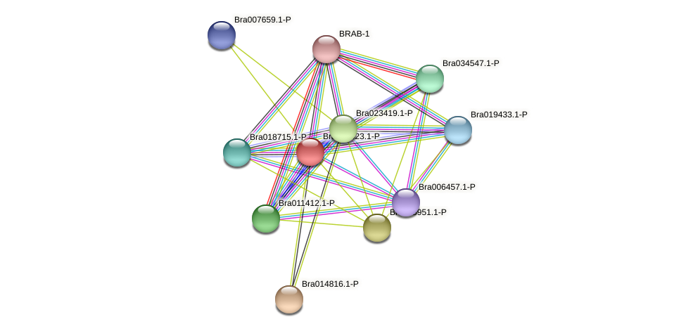 Bra008823 protein (Brassica rapa) - STRING interaction network