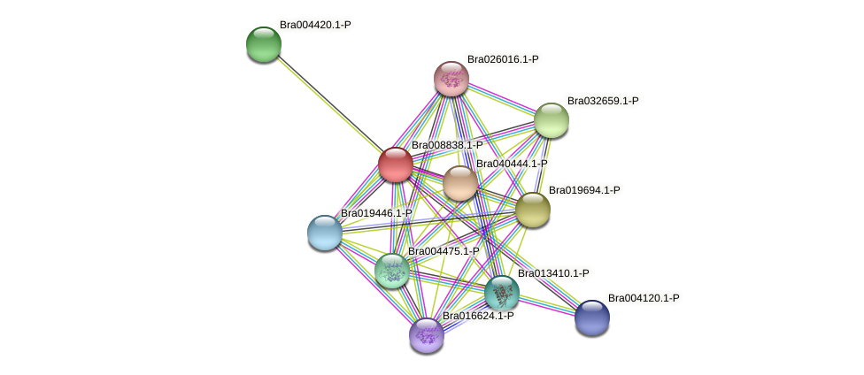 Bra008838 protein (Brassica rapa) - STRING interaction network